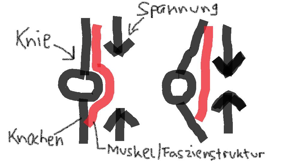 Muskel Faszien Struktur